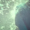 Sano ibuki 『スイマー』 MV